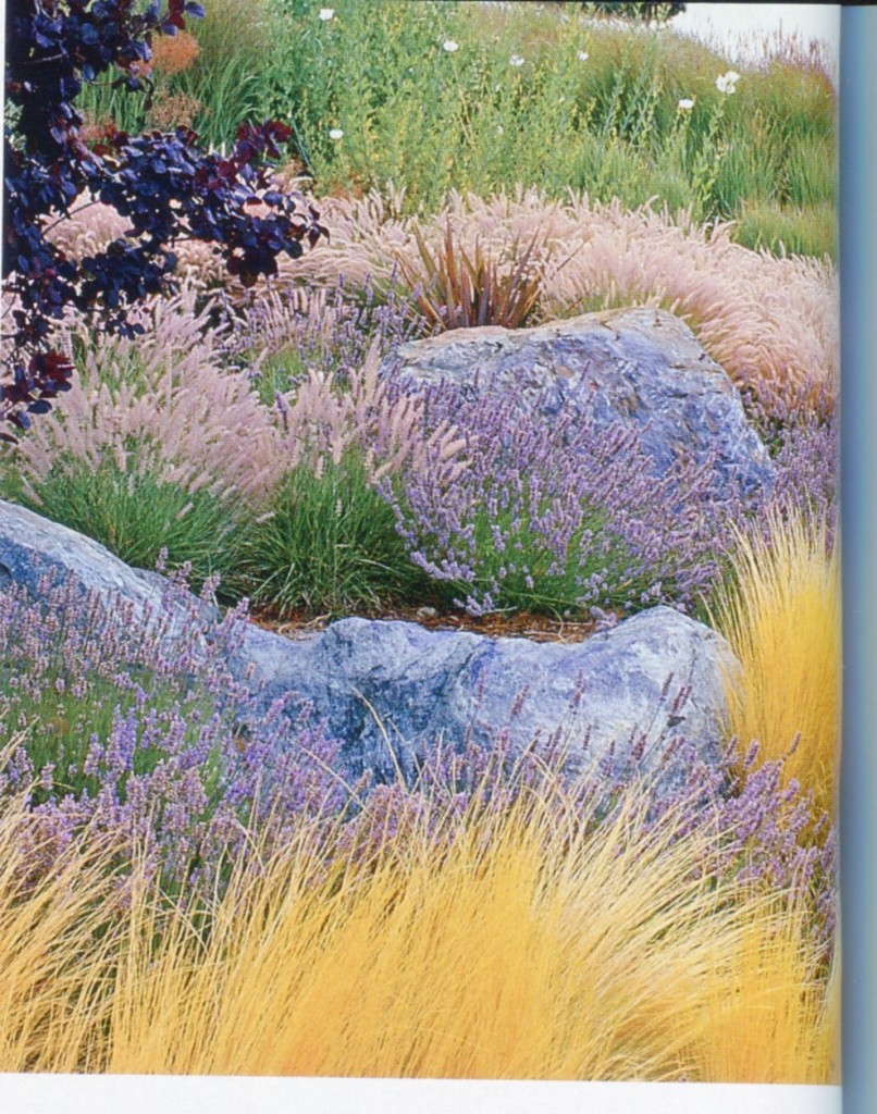 Nice grasses with boulders.